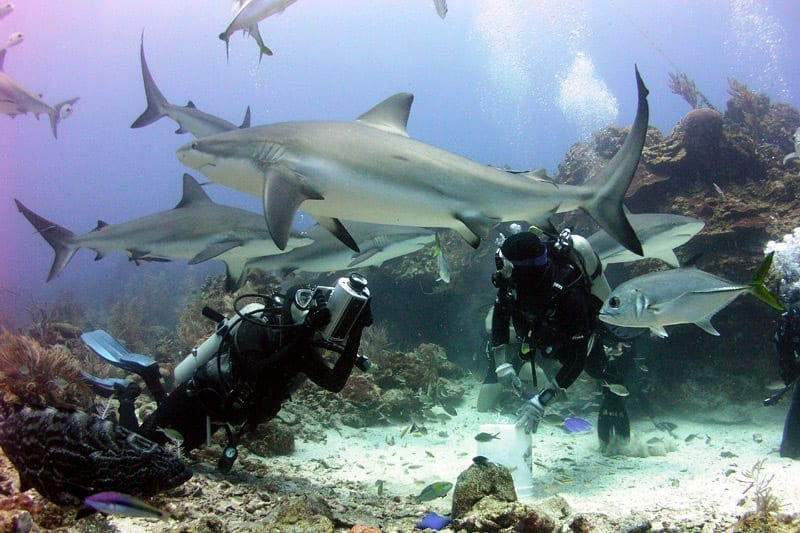 Shark diving near Roatan in Honduras