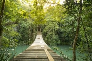 Footbridge over river in tranquil forest in Belize. Jungle hikes in Belize.
