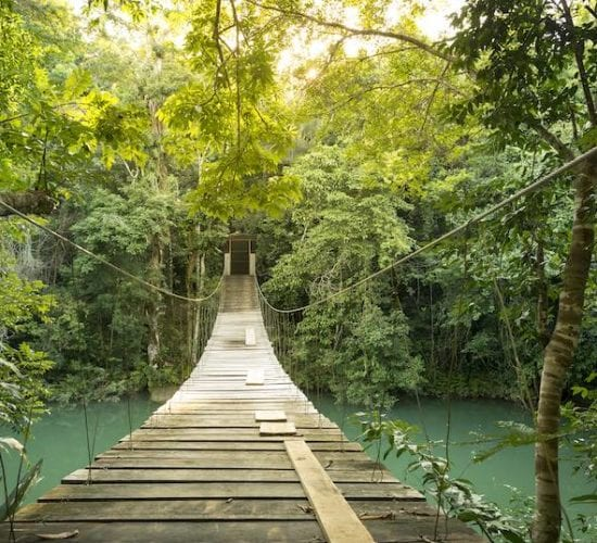 Footbridge over river in tranquil forest . Belize Vacation Package