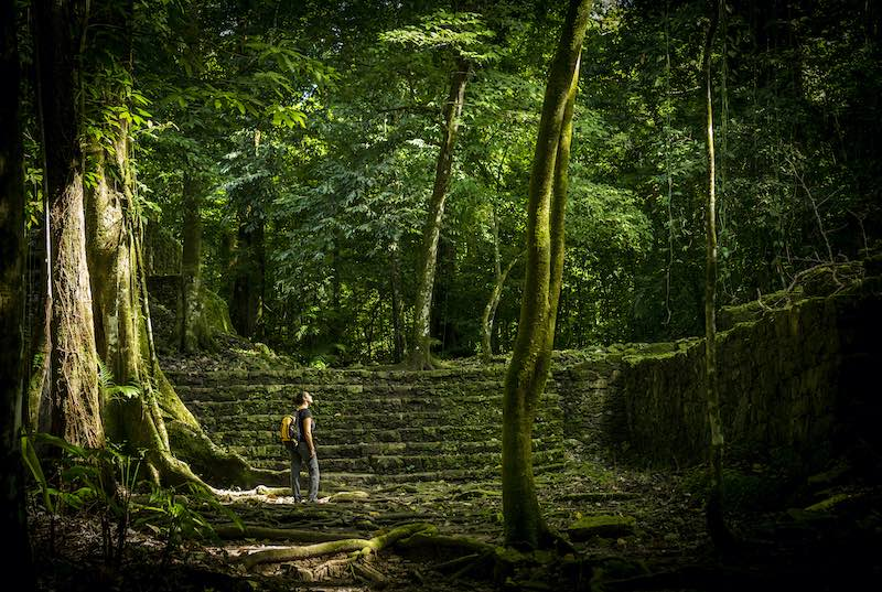 Jungle trek in Mayan jungle ruins in Mexico. Jungle Expedition