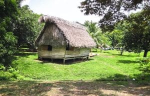 An indigenous house made with wood and a thatched roof in southern Belize. Jungle hikes.