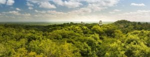 Panorama of the Mayan city of Tikal, Guatemala. View from Temple IV. Tikal Tours