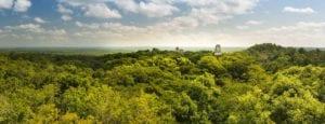 Panorama of the Mayan city of Tikal, Guatemala. View from Temple IV. Mayan Gateway Travel Agency