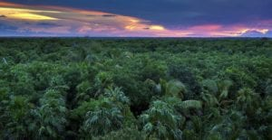 A sunsetting horizon over the top of a jungle. Hikes in Mexico