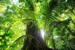 Beautiful jungle of Costa Rica, Central America. Costa Rica Hikes.