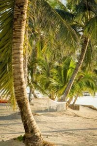 White hammock hanging in palm trees on tropical beach in Belize. Belize Vacations