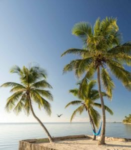 Beautiful palm trees in a small island in the Caribbean. Travel Belize